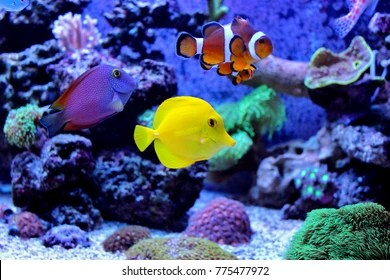 aquarium images stock photos