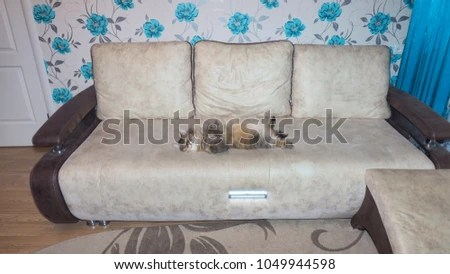 fuzzy sofa council collection bedford arrogant cat on couch stock photo edit now 1049944598 the