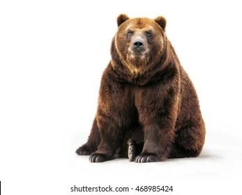 bear images stock photos