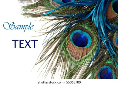 Peacock Feather Images Stock Photos Vectors Shutterstock