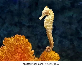 seahorse images stock photos