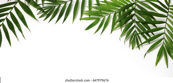 Drop Of Water Falling From A Leaf Dark Background Wallpaper Tree Leaves Images Stock Photos Amp Vectors Shutterstock