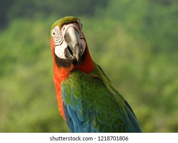 severe macaw images stock