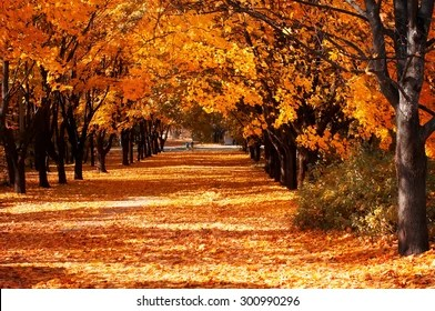 autumn trees images stock