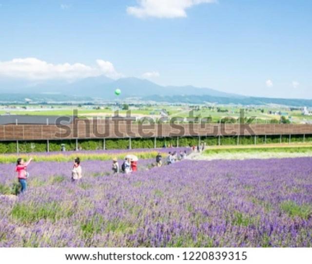 Biei Hokkaido Japan July 27 2018 Irodori Field With Tourists In