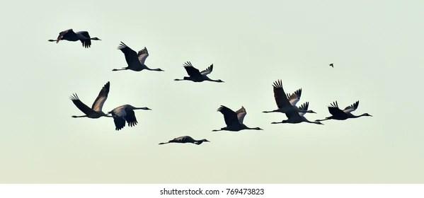 birds in flight images