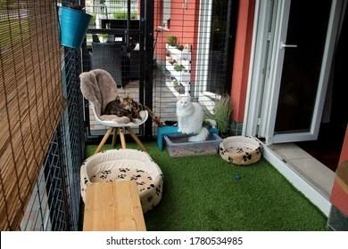 https www shutterstock com image photo black green cat diy patio catio 1780534985