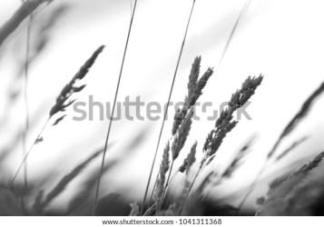 Black White Closeup Plant Stems Stock Photo Edit Now 1041311368