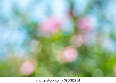 Cherry Blossoms Falling Stylized Wallpaper Springtime Background Images Stock Photos Amp Vectors