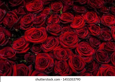 red rose images stock