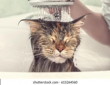 cat bathtub images stock