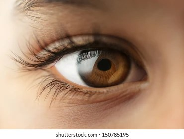 light brown eyes images