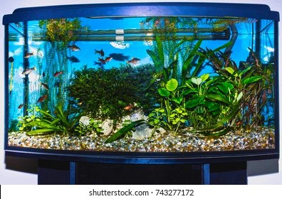 home aquarium images stock