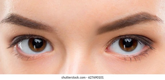 eye contact images stock