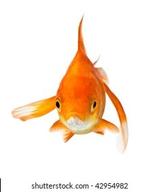Fish Front View : front, Front, Stock, Images, Shutterstock