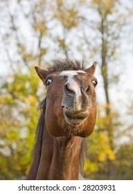 Funny Horse Face : funny, horse, Horse, Funny, Stock, Images, Shutterstock