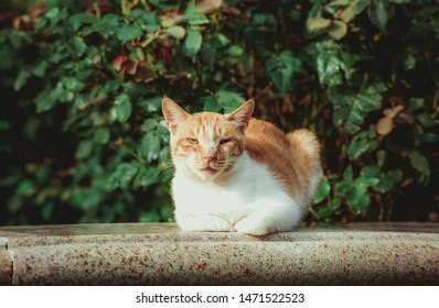 screensaver cats images stock