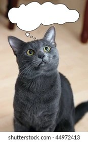 Confused Cat Images, Stock Photos & Vectors   Shutterstock