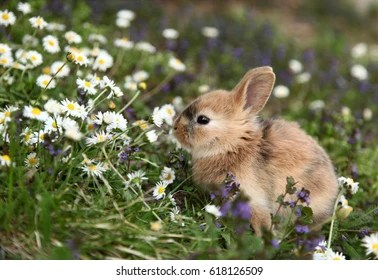 cute rabbit images stock