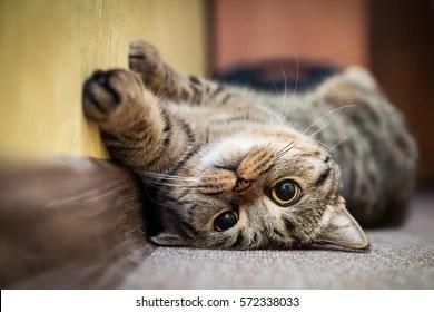 cat images stock photos
