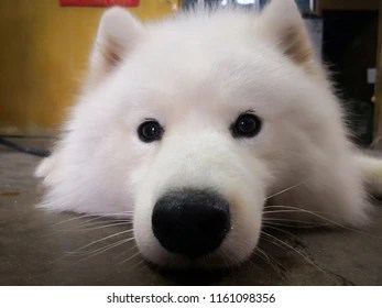 cute puppy images stock