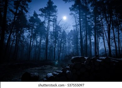 night forest images stock