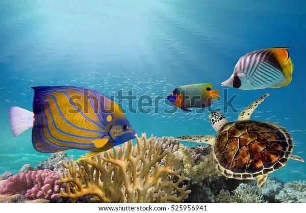 Deep Sea Coral Reef Coral Reef 庫存照片(立即編輯)525956941