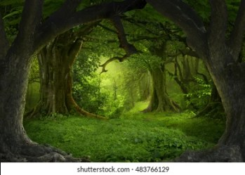 Forest Background Images Stock Photos & Vectors Shutterstock