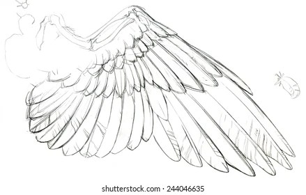 Birds Wing Anatomy Drawing Images, Stock Photos & Vectors