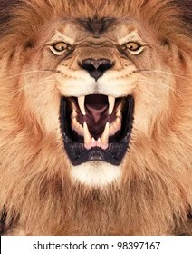 lion face images stock