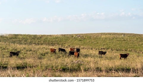 Extensive Farming Images,單詞音標, Stock Photos & Vectors | Shutterstock