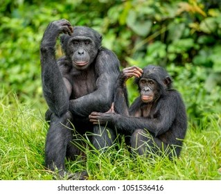 Animals Wildlife Images Pictures Photos Animals Wildlife Photographs Shutterstock