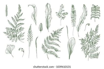 Flora Background Images, photos et images vectorielles de