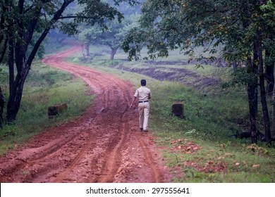 We manage approximately 117,000 hectares of forests in jamaica. Forest Department Hd Stock Images Shutterstock