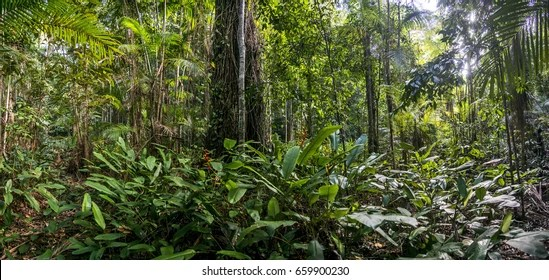 It is often confused with elk neck state park, which lies further south, near the end of the same peninsula. Atlantic Forest Brazil Images Stock Photos Vectors Shutterstock