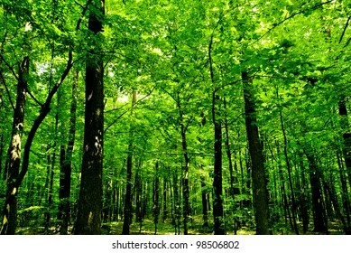 forest trees images stock