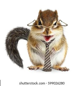 funny chipmunk images stock