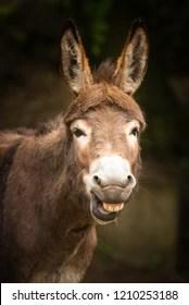 Funny Donkey Pictures : funny, donkey, pictures, Funny, Donkey, Stock, Images, Shutterstock