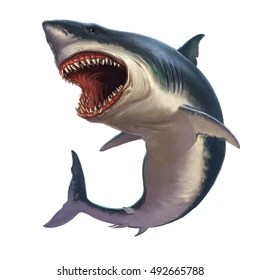 Image result for free blog pics of great white sharks