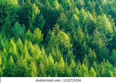 This is the easiest way to make your voice heard and create real change. Forest Resources Hd Stock Images Shutterstock