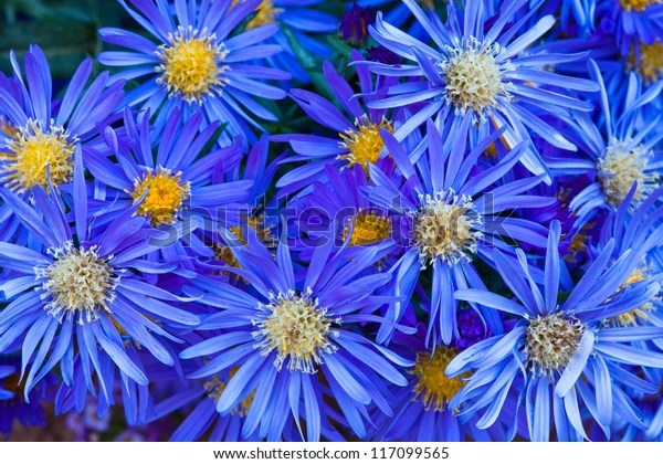 group blue flowers yellow