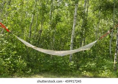 hammock between trees images