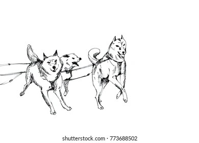 Husky Sketch Stock Images, Royalty-Free Images & Vectors