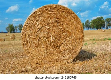 hay bail images stock