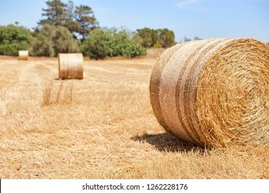 round bale images stock