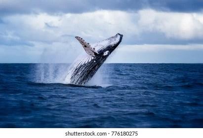 Hipster Fall Desktop Wallpaper Whale Images Stock Photos Amp Vectors Shutterstock