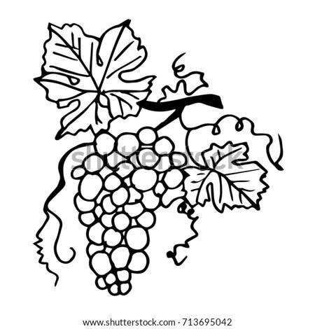 Grape silhouette outline vector Stock Photo 155550665