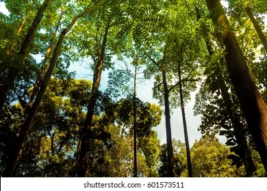 Tropical Rainforest Indonesia Hd Stock Images Shutterstock