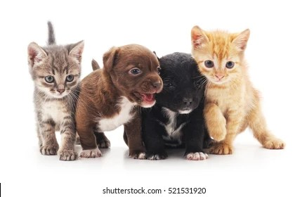 kitten and puppy images