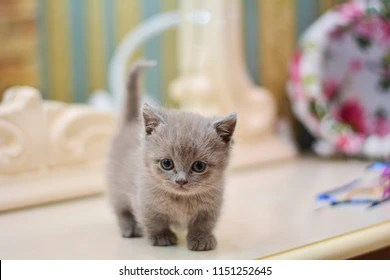 kitty cat images stock